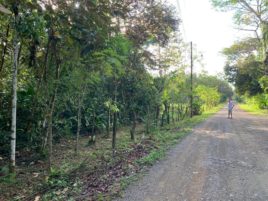 Venta de terreno de 4 hectáreas en Península de Osa