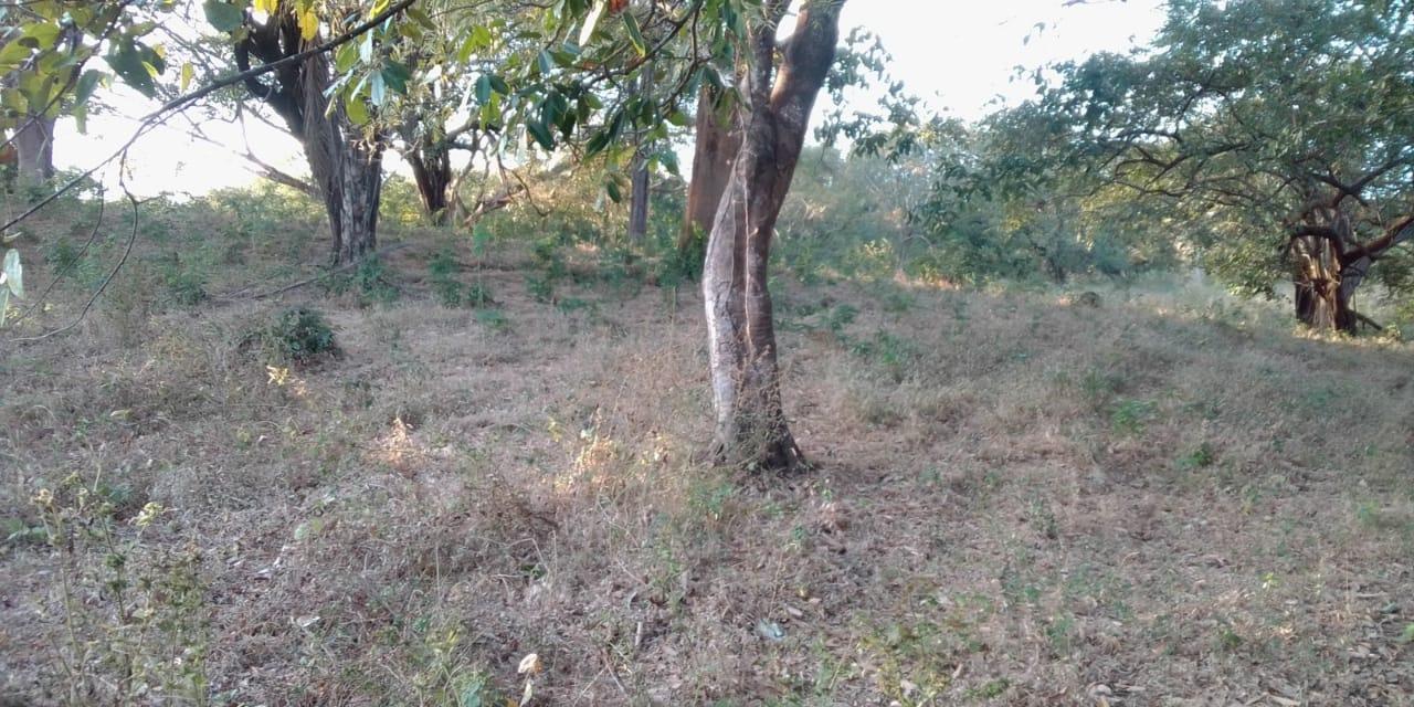Venta de terreno en Nicoya de 71 hectáreas