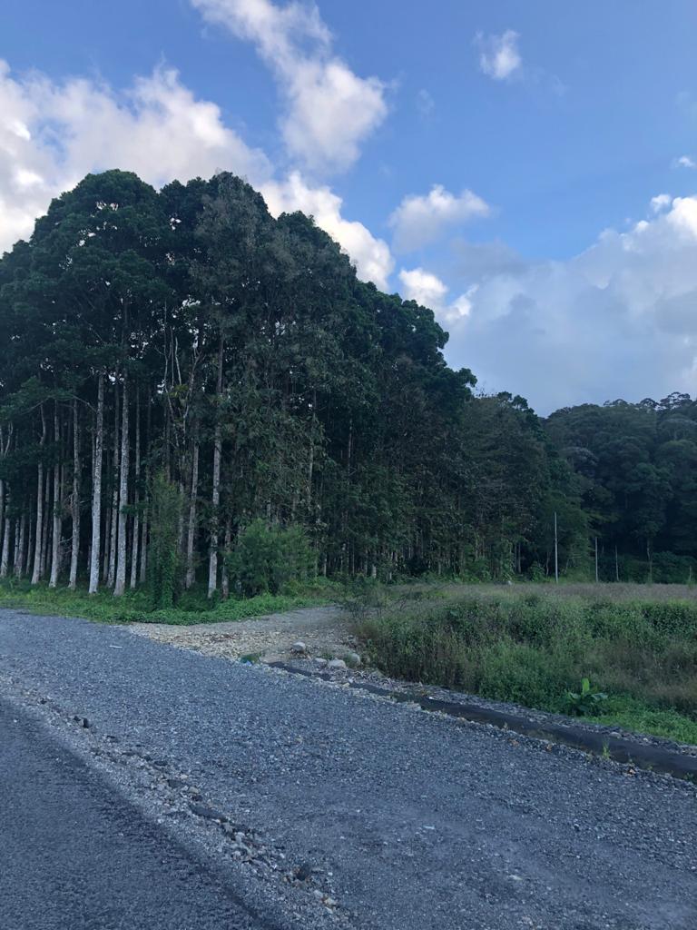 Venta de finca de 60 hectáreas en Guápiles