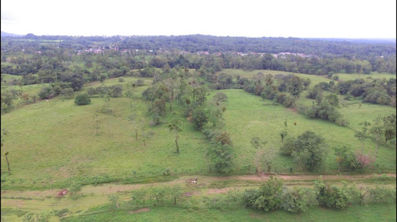 Venta de terreno de 7.8 hectáreas en Rio Cuarto de Alajuela